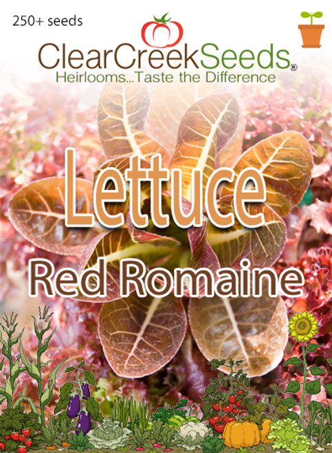 Lettuce – Red Romaine (250+ seeds)