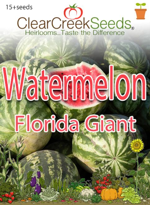 Watermelon – Florida Giant (15+ seeds)