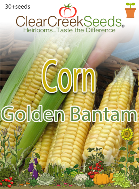 Corn – (Sweet) Golden Bantam (30+ seeds)