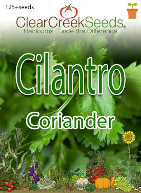 Cilantro - Coriander  (125+ seeds)