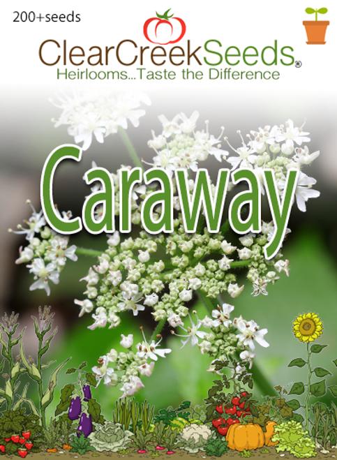 Caraway (200+ seeds)