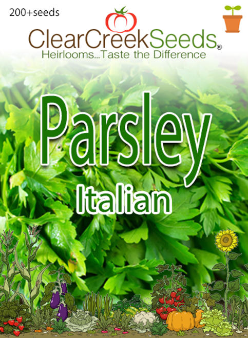 Parsley - Italian (200+ seeds)