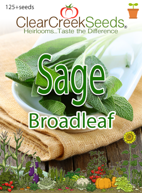 Sage - Broadleaf (125+ seeds)
