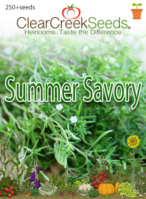 Summer Savory (250+ seeds)