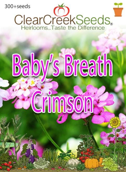 "Baby's Breath ""Crimson"" (300+ seeds)"