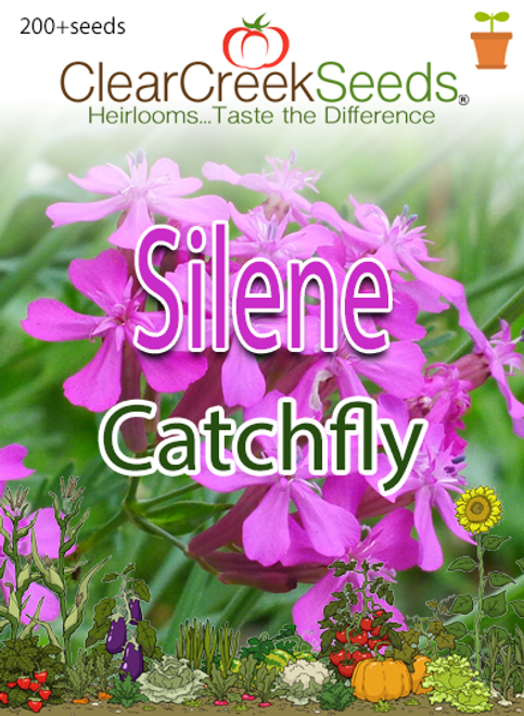 "Silene ""Catchfly"" (200+ seeds)"