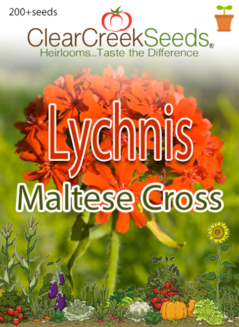 "Lychnis ""Maltese Cross"" (200+ seeds)"