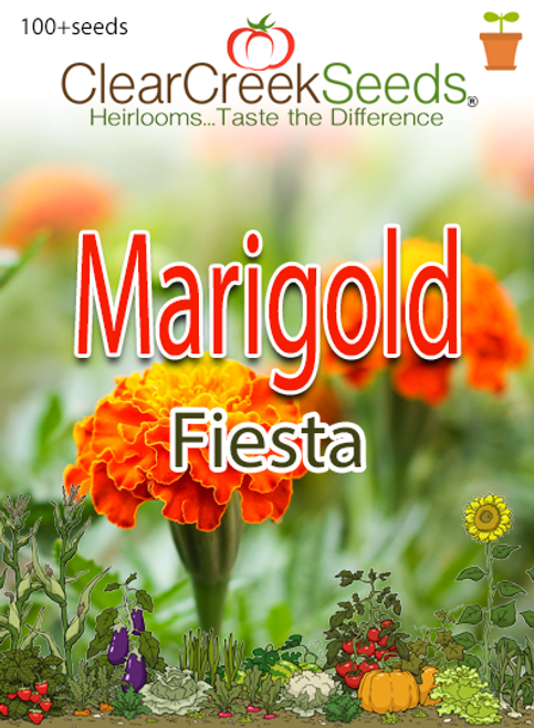 "French Marigold ""Fiesta"" (100+ seeds)"