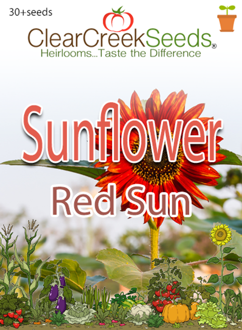 "Sunflower ""Red Sun"" (30+ seeds)"