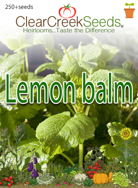 Lemon Balm (250+ seeds)