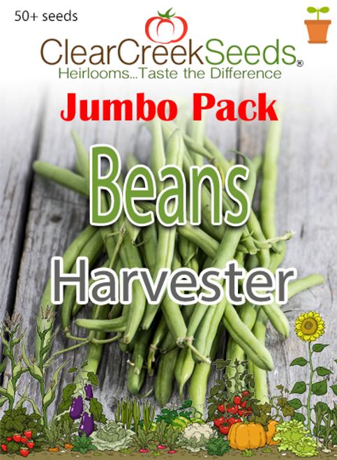 Bean (Bush) Harvester (50+ seeds) JUMBO PACK