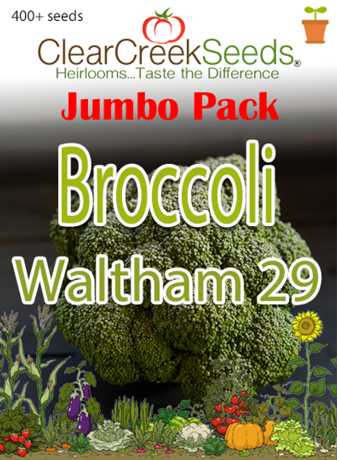 Broccoli - Waltham 29 (400+ seeds) JUMBO PACK