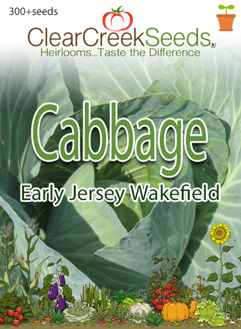Cabbage - Early Jersey Wakefield (300+ seeds) JUMBO PACK