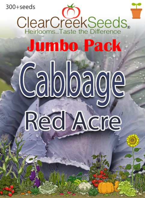 Cabbage - Red Acre (300+ seeds) JUMBO PACK