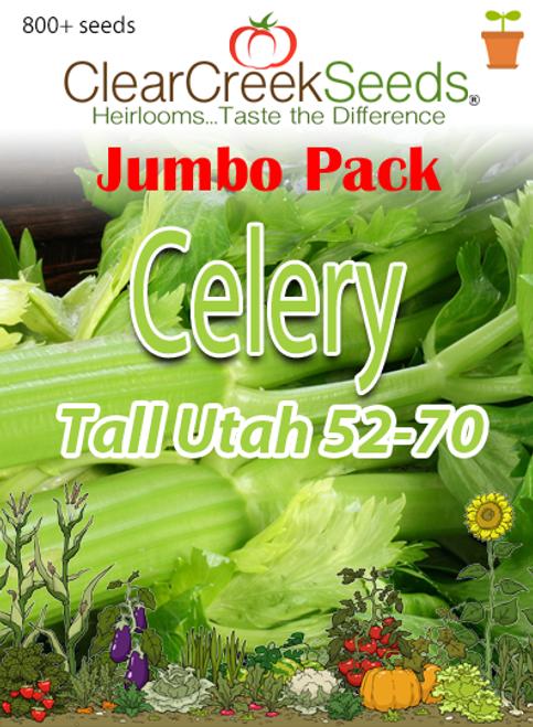 Celery - Tall Utah 52-70 (800+ seeds) JUMBO PACK
