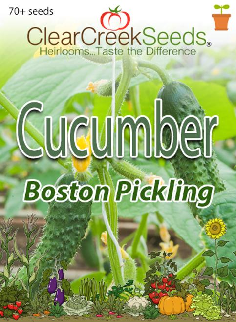 Cucumber - Boston Pickling (70+ seeds) JUMBO PACK