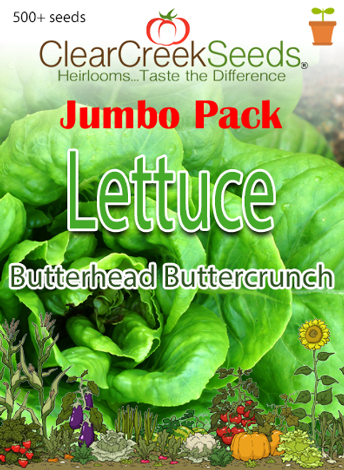 Lettuce Butterhead - Buttercrunch (500+ seeds) JUMBO PACK