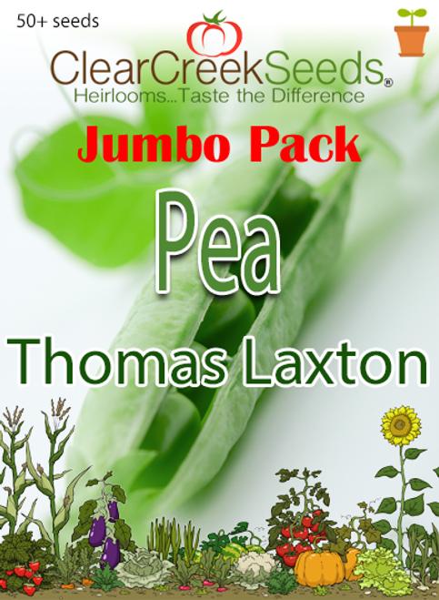 Pea Shelling - Thomas Laxton (50+ seeds) JUMBO PACK