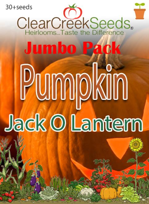 Pumpkin - Jack O Lantern (30+ seeds) JUMBO PACK