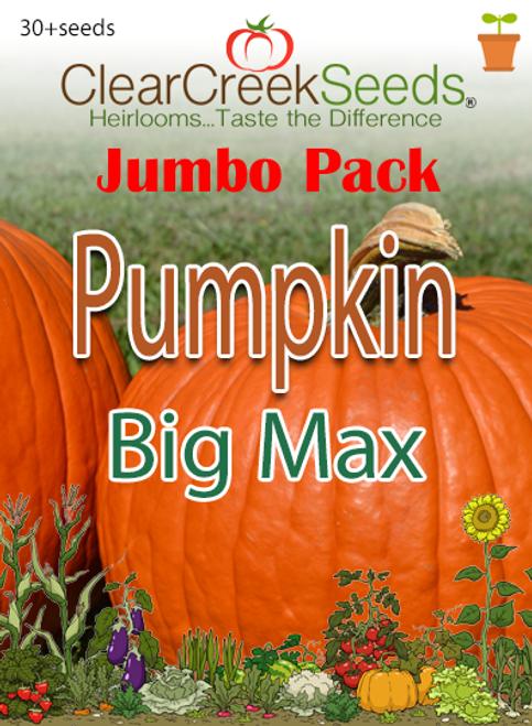 Pumpkin - Big Max (30+ seeds) JUMBO PACK