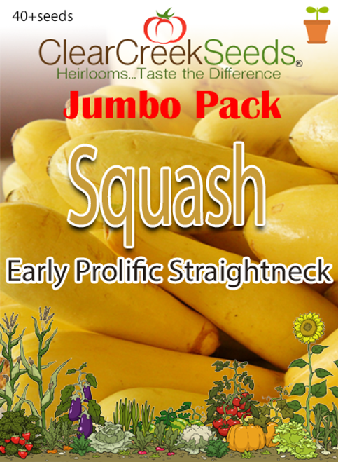 Squash Summer - Early Prolific Straightneck (40+ seeds) JUMBO PACK