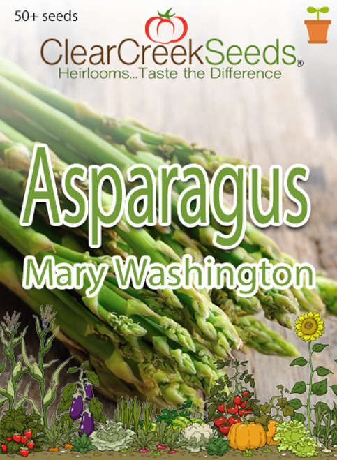 Asparagus - Mary Washington (50+ seeds)
