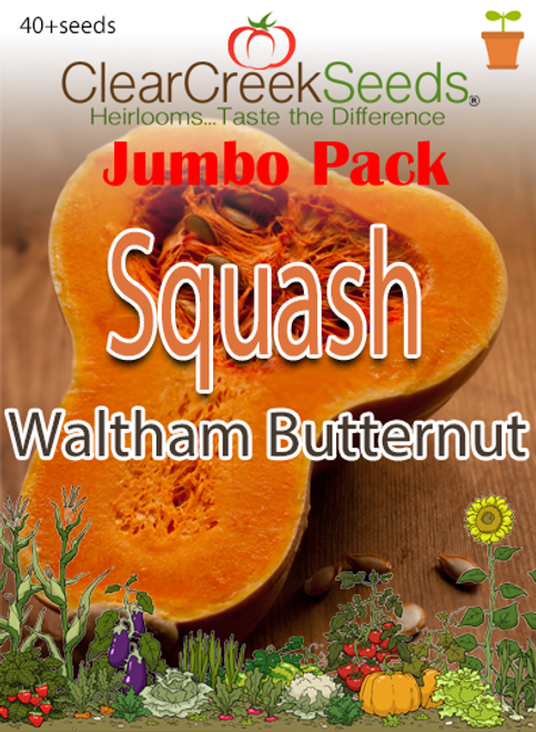 Squash Winter - Waltham Butternut (40+ seeds) JUMBO PACK