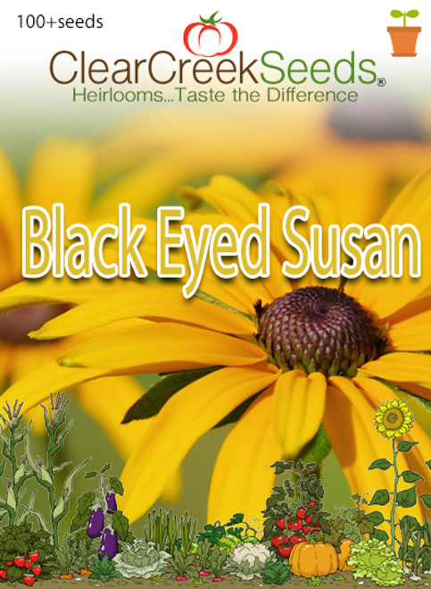 Black Eyed Susan (100+ seeds)