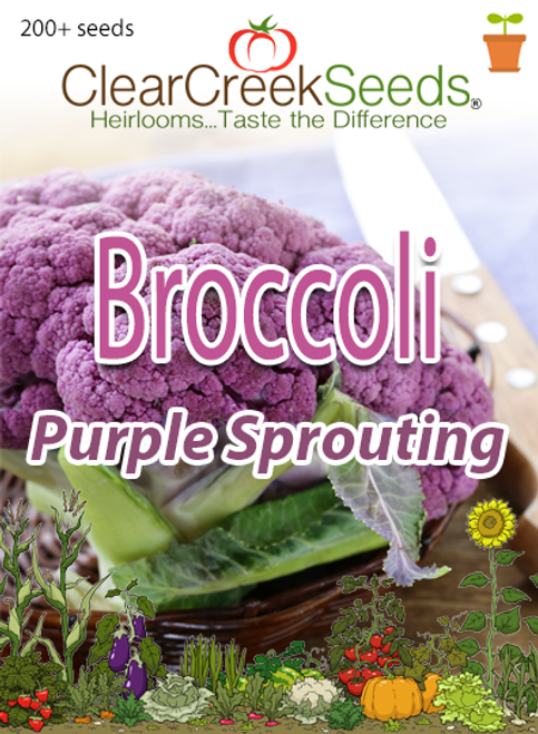 Broccoli - Purple Sprouting (200+ seeds)