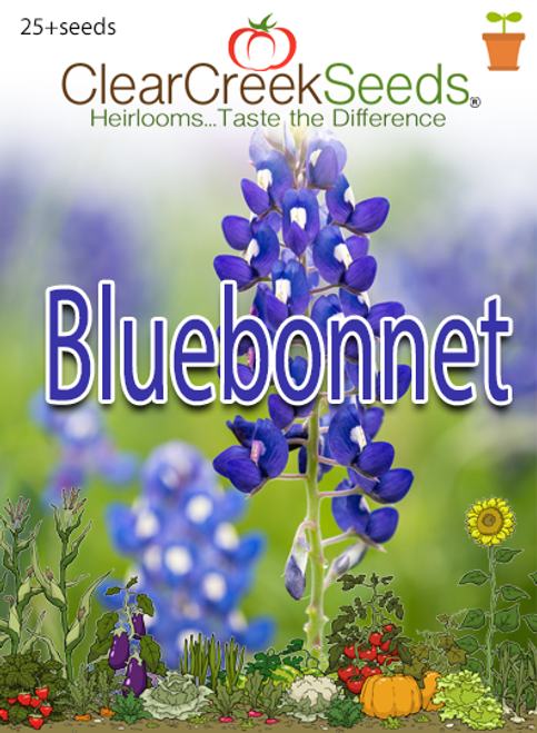 Bluebonnet (25+ seeds)