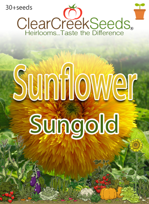 "Sunflower ""Sungold Dwarf"" (30+ seeds)"
