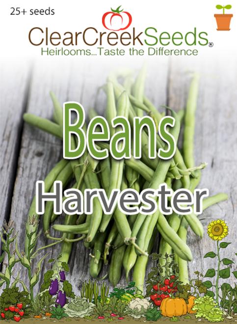 Bean (Bush) Harvester (25+ seeds)