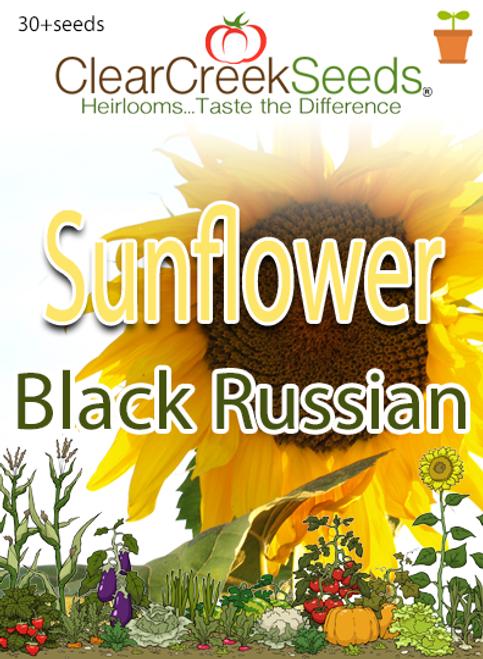 Sunflower Black Russian (30+seeds)
