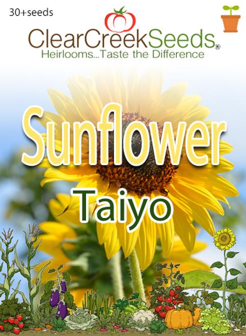 Sunflower Taiyo (30+seeds)