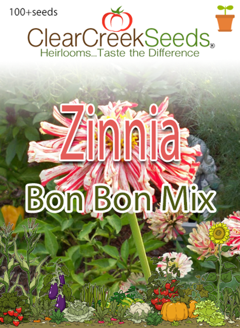 Zinnia - Bon Bon Mix (100+seeds)