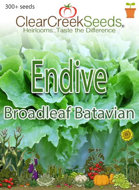 Endive - Broadleaf Batavian (300+ seeds)