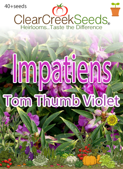 Impatiens - Tom Thumb Violet (40+ seeds)