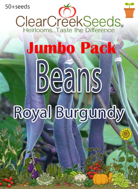 Bean - (Bush) - Royal Burgundy (50+ seeds) JUMBO PACK