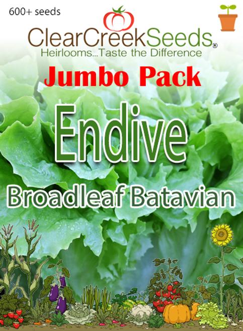 Endive - Broadleaf Batavian (600+ seeds)  JUMBO PACK