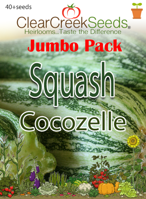 Squash Summer -  Cocozelle (40+ seeds) JUMBO PACK