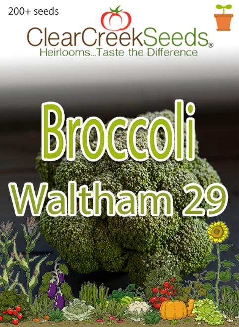 Broccoli - Waltham 29 (200+ seeds)