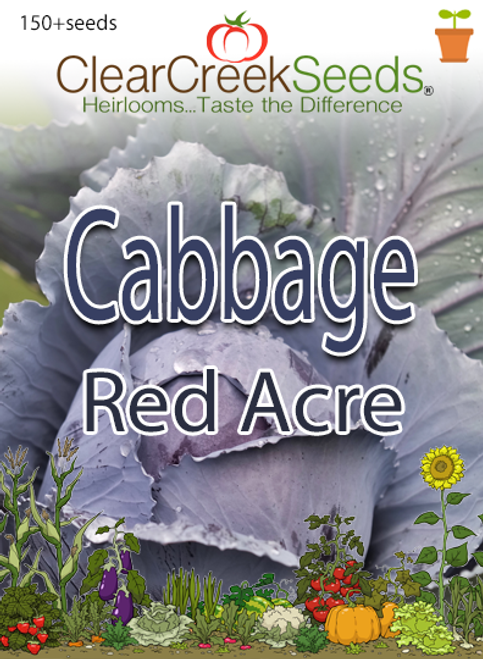 Cabbage - Red Acre (150+ seeds)