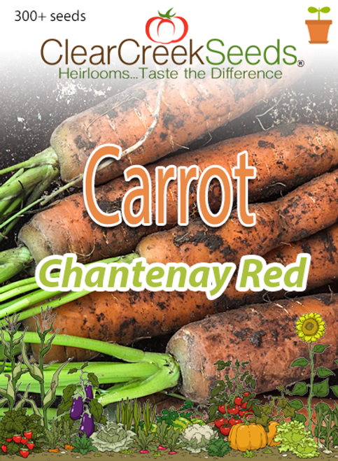 Carrot - Chantenay Red (300+ seeds)