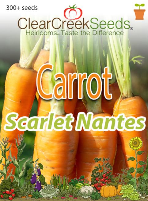 Carrot - Scarlet Nantes (300+ seeds)