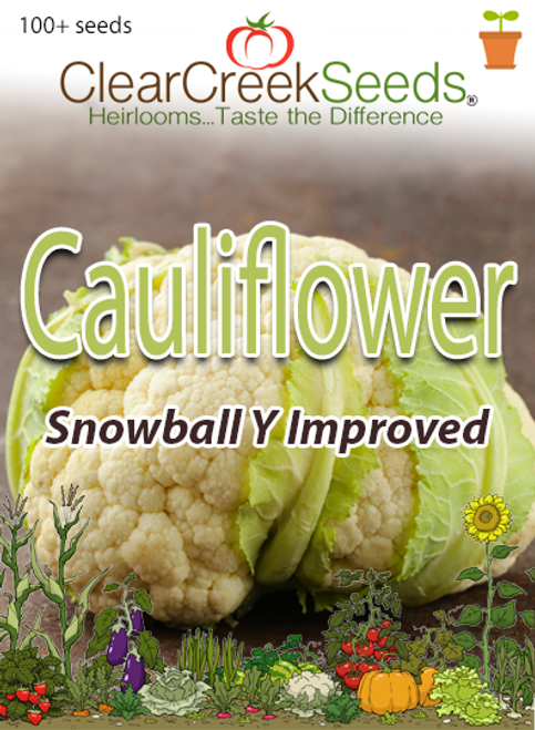 Cauliflower - Snowball Y Improved (100+ seeds)