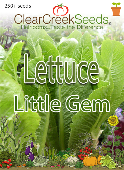 Lettuce Romaine - Little Gem (250+ seeds)