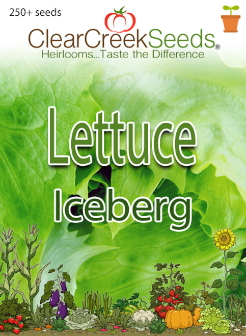 Lettuce Head - Iceberg (250+ seeds)