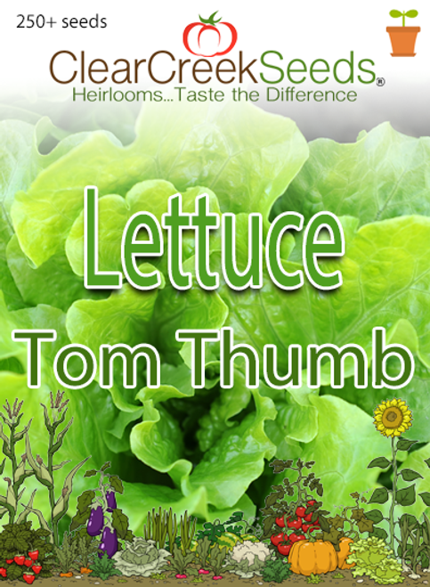 Lettuce Butterhead - Tom Thumb (250+ seeds)