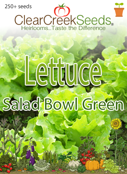 Lettuce Leaf - Salad Bowl Green (250+ seeds)