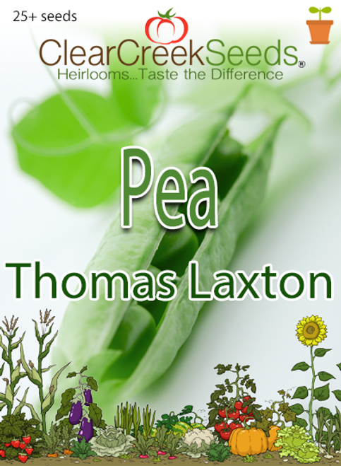 Pea Shelling - Thomas Laxton (25+ seeds)
